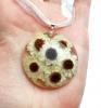 Cvetovi amobiuma
