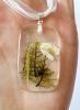 Navadni mali zvonček (v ozadju gozdni mah)
