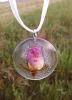 Šipkov cvet (divja vrrtnica)