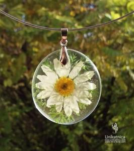 Pomen rož - ivanjščica
