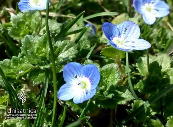 Jetičnik - pomladna kolekcija nakita 2018, pomladne cvetice