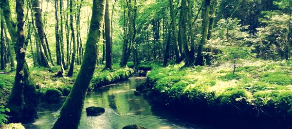 LEpota neokrnjene narave