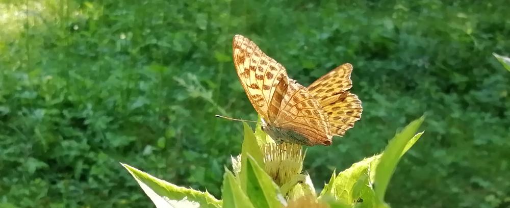 Čarobni metulji