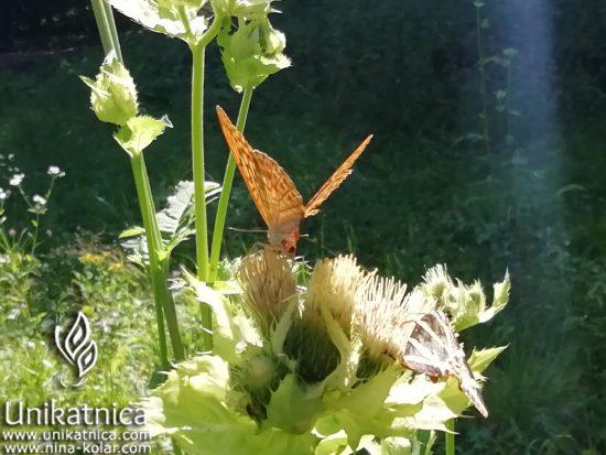 Metulj s čudovitim vzorcem na krilih