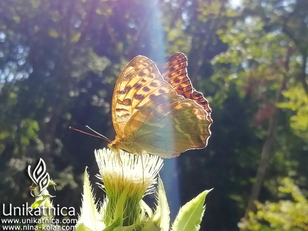 Čarobni metulji 1
